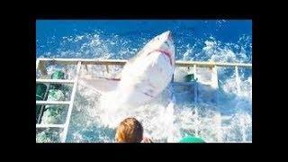 فيلم رعب القرش الرهيب والمنتظر بشدة القرش الصياد 2017 مترجم  حصريا